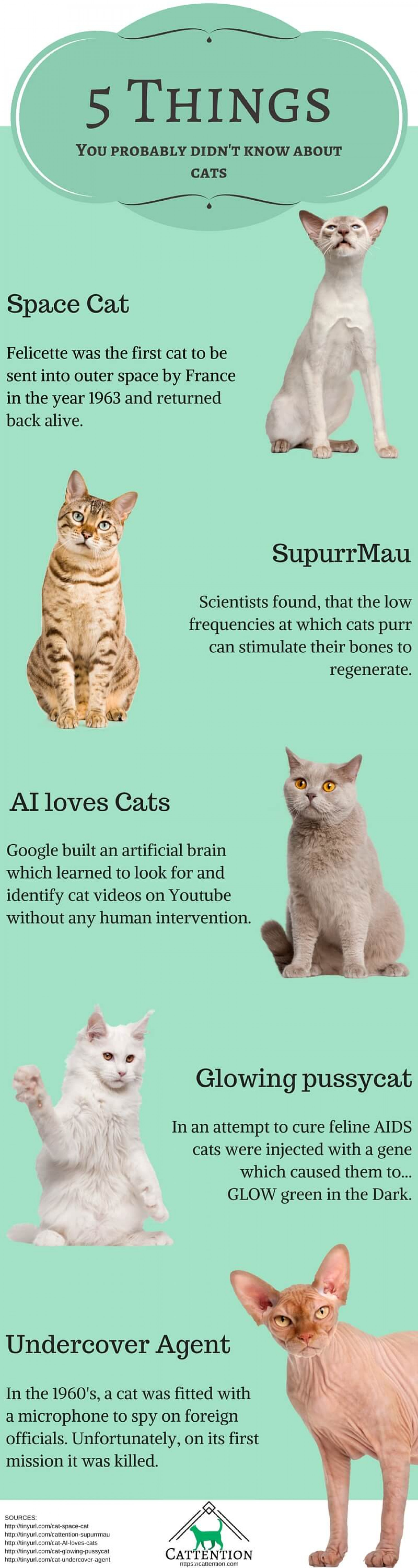 5 Things You Probably Didn't Know About Cats Infographic