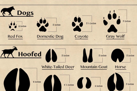 50 Animal Footprints Found in North America Infographic