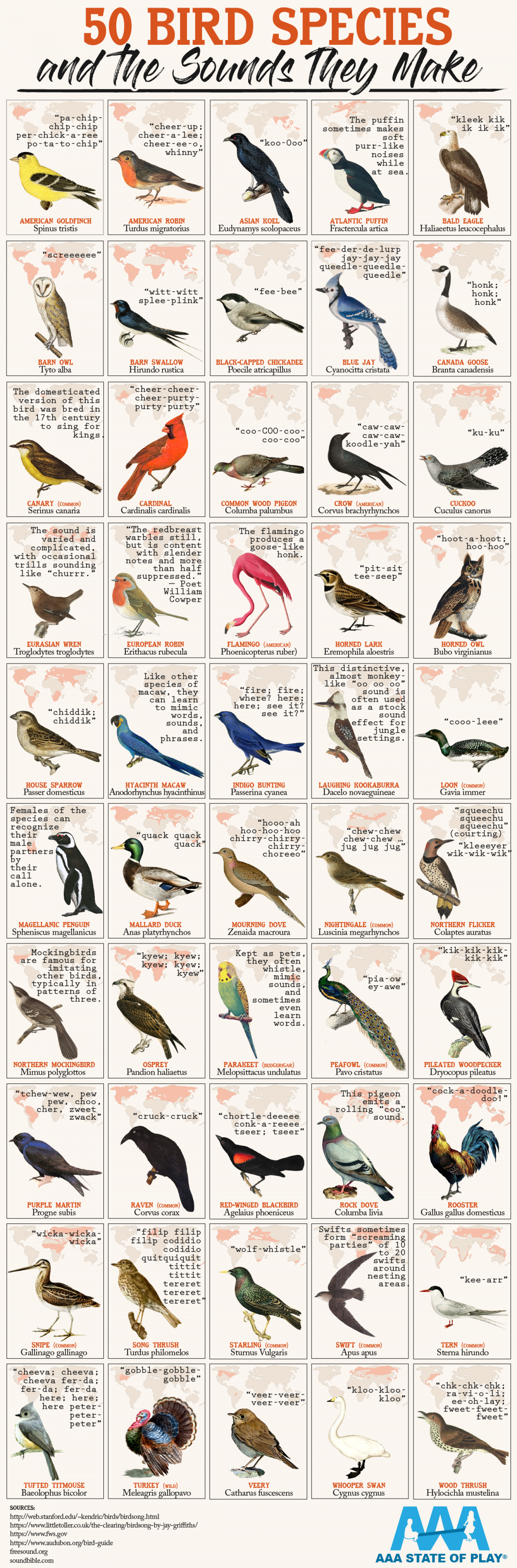 50 Bird Species and the Sounds They Make  Infographic
