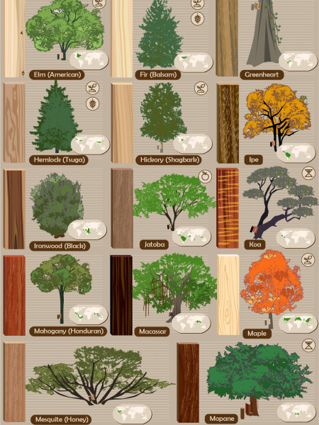 52 Types of Wood and the Trees They Come From Infographic