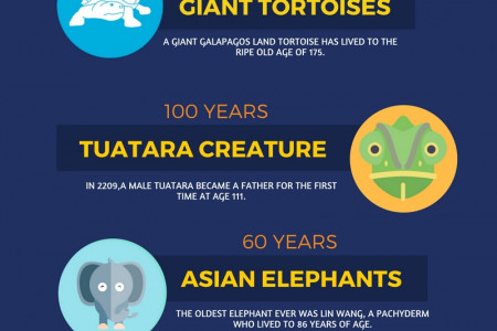 6 Animals that Live Long Lives  Infographic