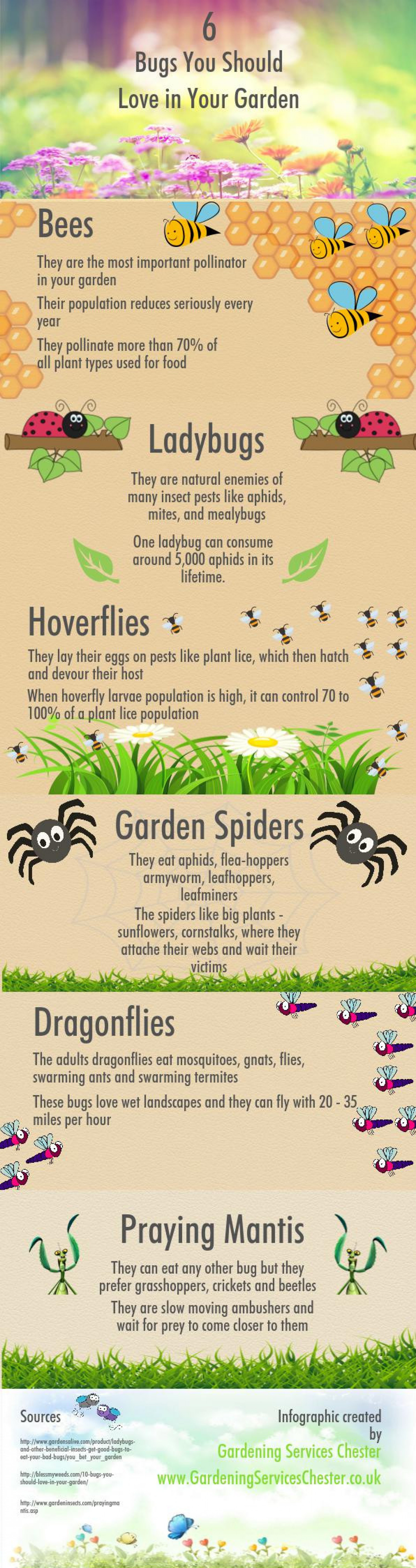 6 Bugs You Should Love in Your Garden Infographic