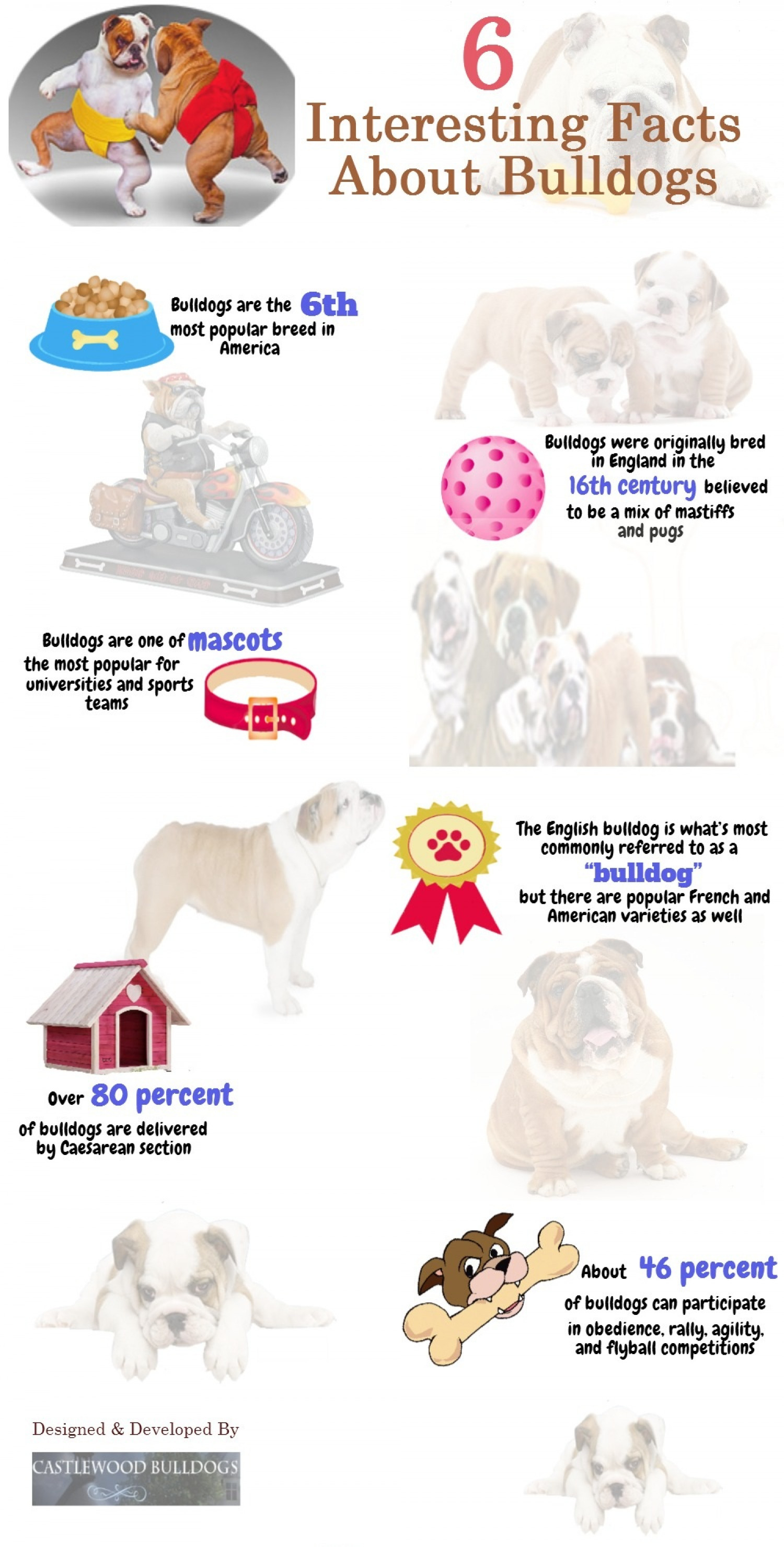6 Interesting Facts About Bulldogs Infographic
