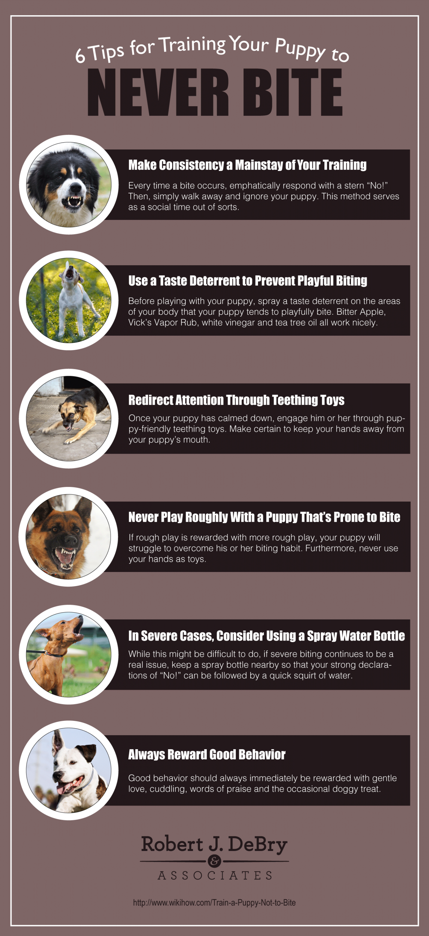 6 Tips for Training Your Puppy to Never Bite | Visual ly