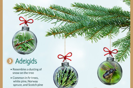 7 Common Christmas Tree Bugs and How to Get Rid of Them Infographic