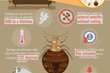 7 Facts You Didn't Know About Bed Bugs Infographic