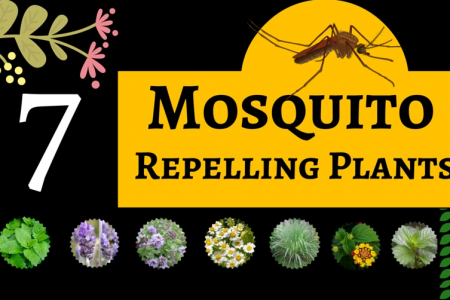 7 Mosquito Repelling Plants Infographic