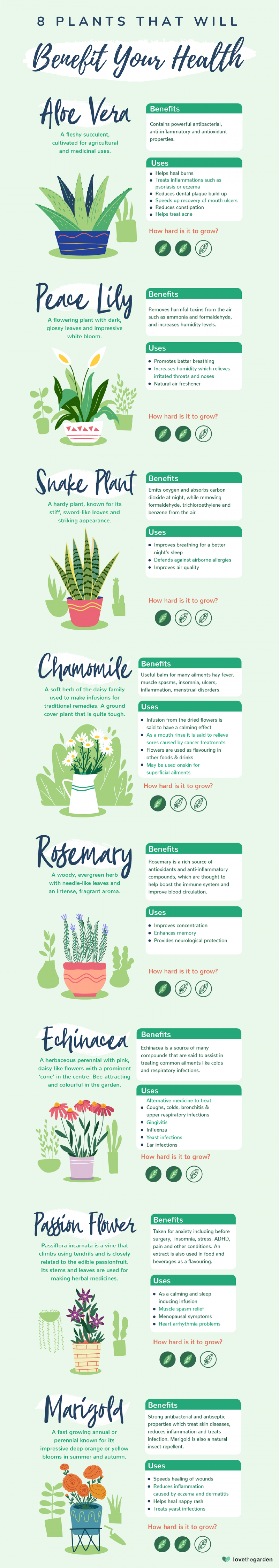 8 Australian Houseplants That Will Benefit Your Health Infographic