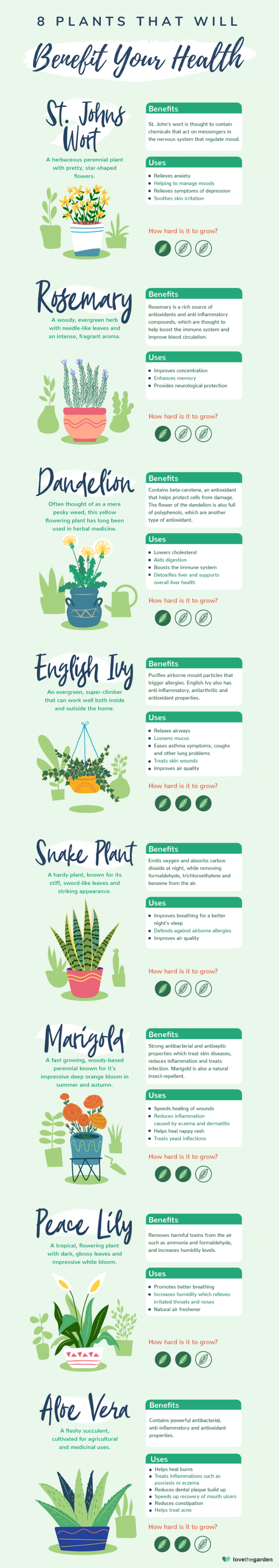 8 Houseplants That Are Good For Your Health Infographic