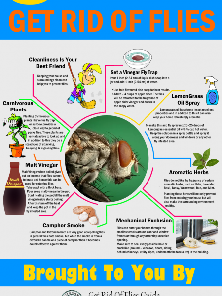 8 Simple And Easy Ways to Get Rid Of Flies Infographic