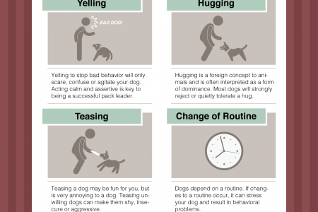 8 Things That Could Invoke Sudden Aggression In a Dog Infographic