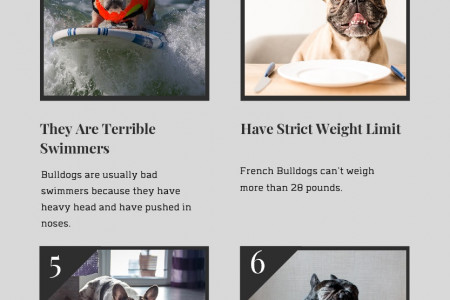 8 Unknown Facts About French Bulldogs Infographic