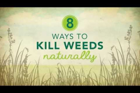8 Ways to Kill Weeds Naturally Infographic