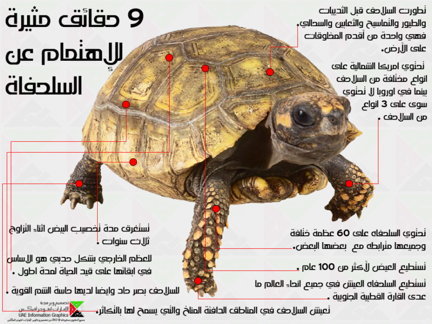 9 Interesting Facts About Tortoise Infographic
