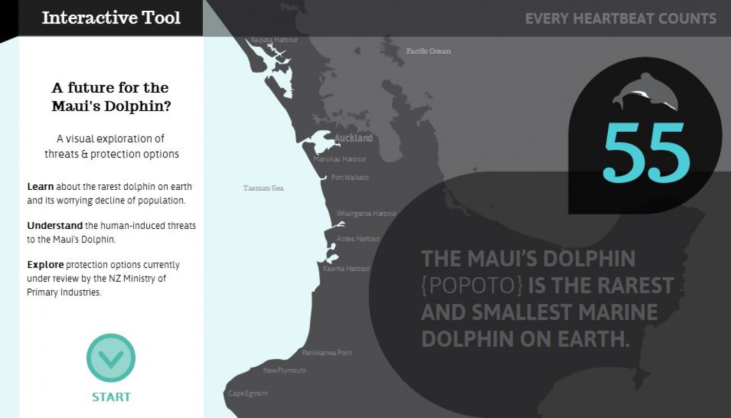 A future for the Maui's Dolphin? Infographic