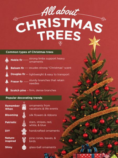 All about Christmas trees infographic Infographic