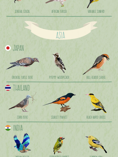 Backyard Birds From Around The World Infographic