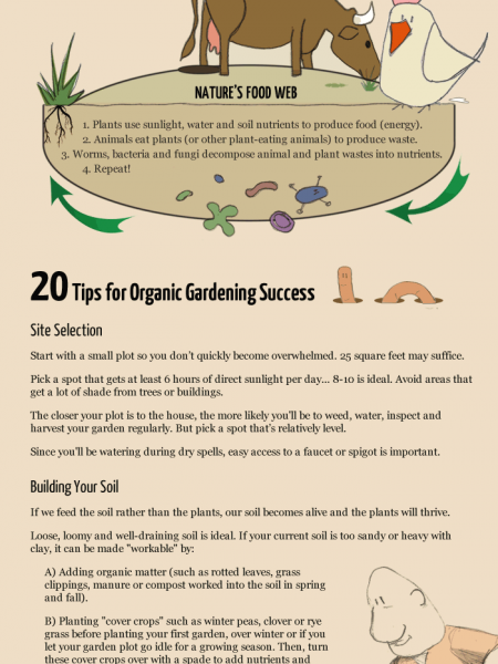 Beginner's Guide to Organic Gardening Infographic