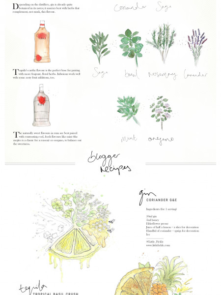 Botanical Cocktails – The Basics Infographic