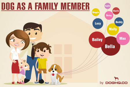 Dog as family member Infographic