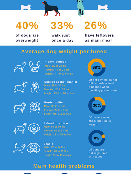 Dog obesity in the UK 2017 Infographic