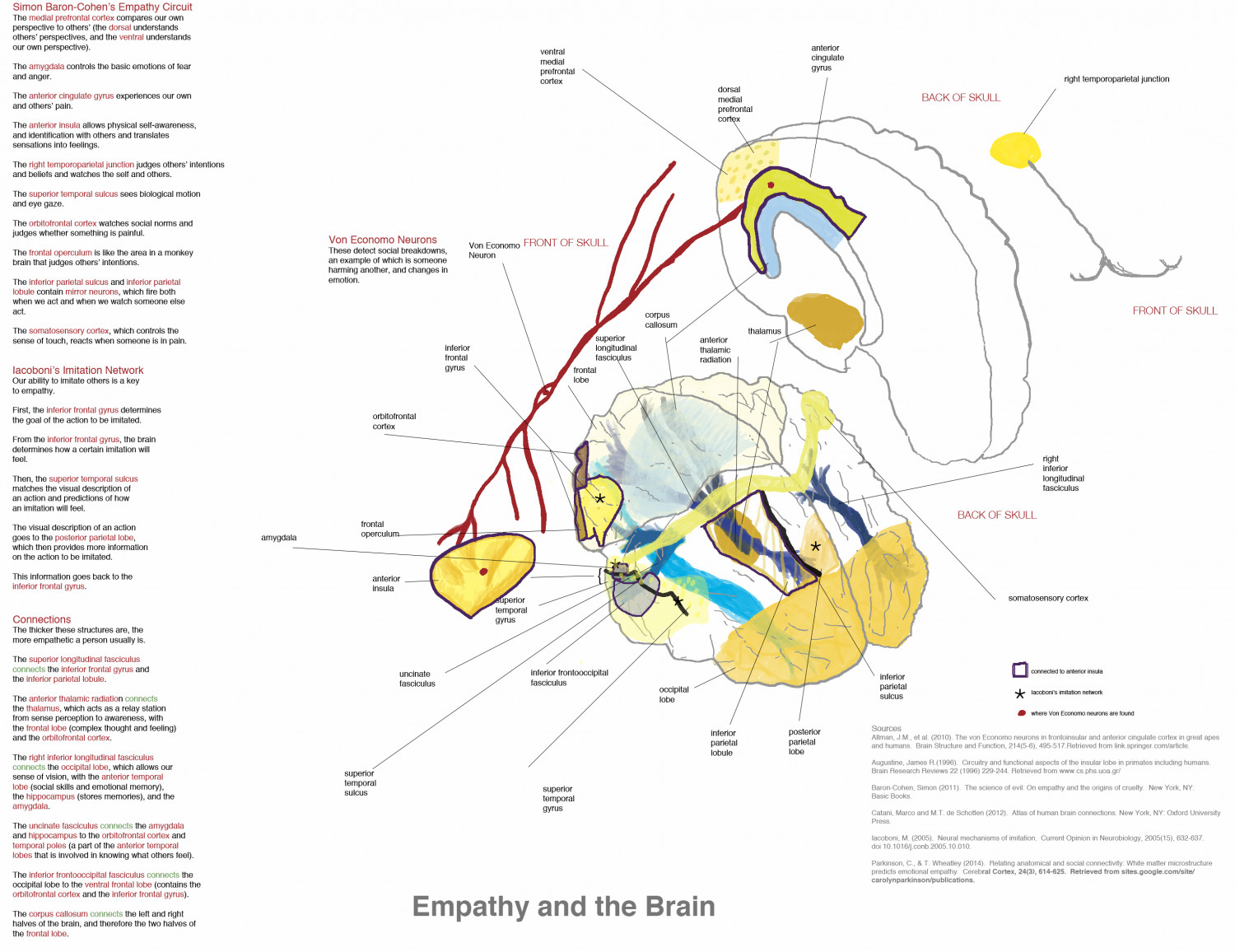 Empathy and the Brain Infographic