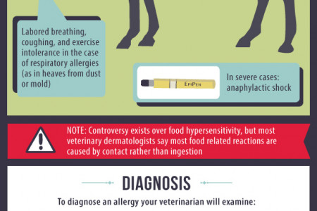 Equine Allergies  Infographic