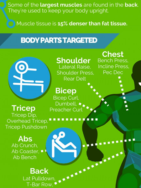 Fitness Equipment Effectiveness - A Visual Guide Infographic