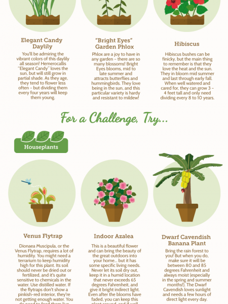 How Hard is it to Grow: A Short Guide to Flowers and Houseplants Infographic