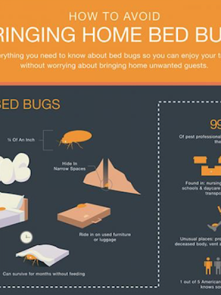 How to Avoid Bringing Home Bed Bugs Infographic