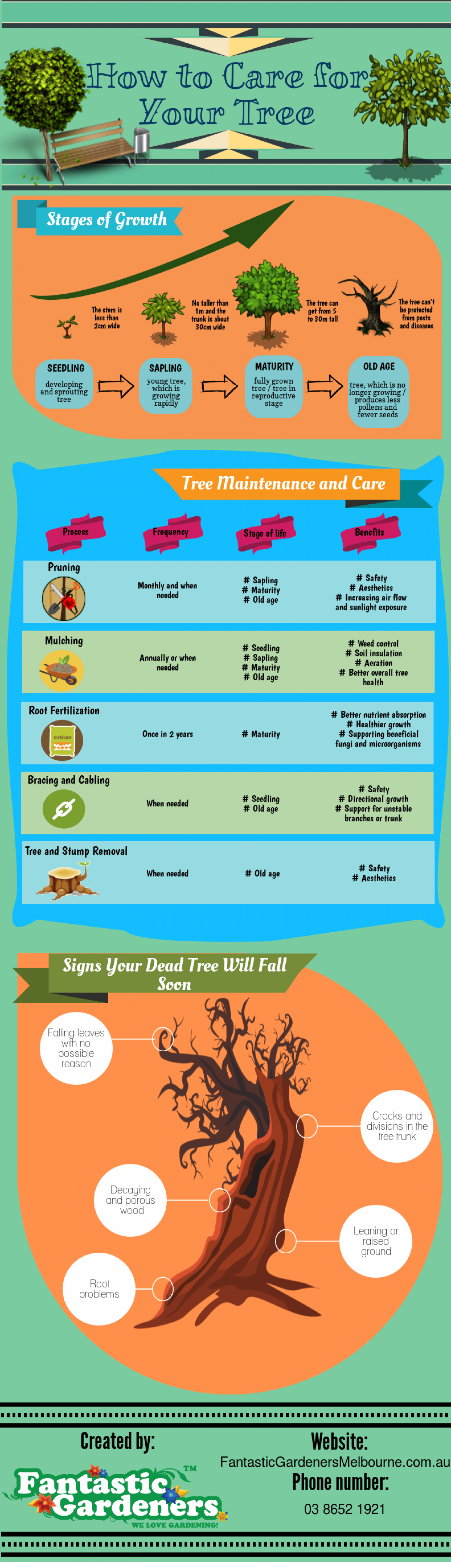 How to Care for Your Tree Infographic
