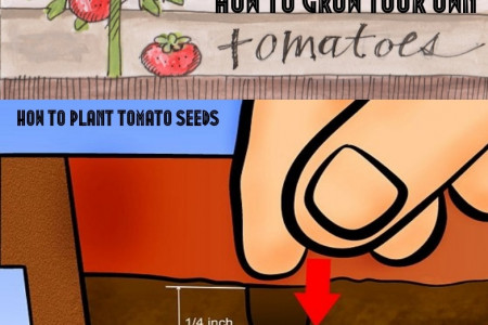 How to Grow Your Own Tomatoes Infographic