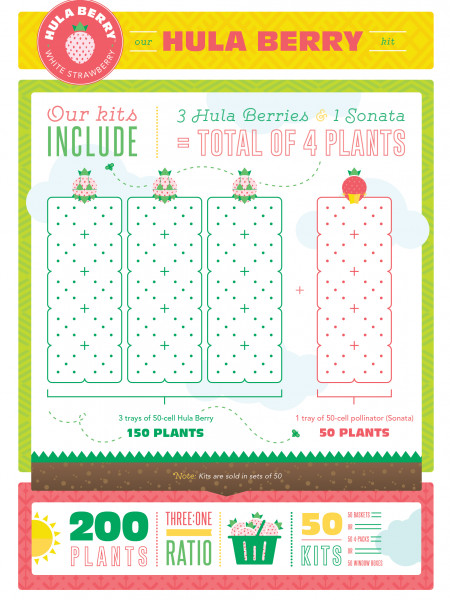 Hula Berry Growing Arrangements Infographic