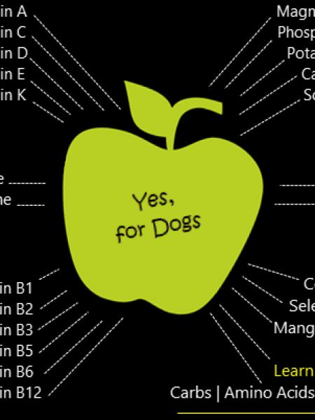 Human Foods Safe for Dogs, Apples for Dogs Infographic