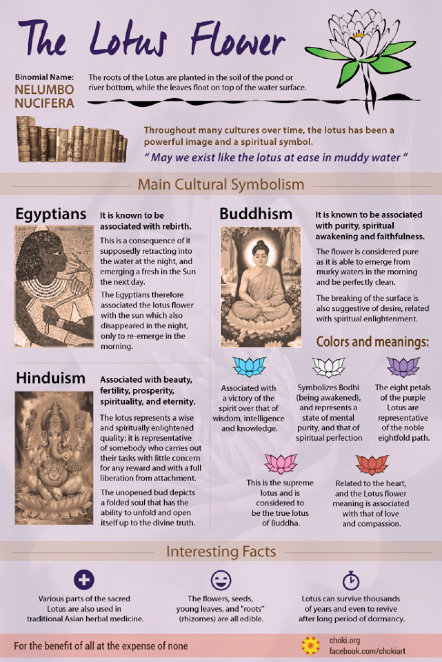 Interesting Facts About The Lotus Flower Visual