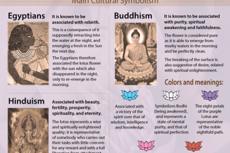 Interesting Facts about the Lotus Flower Infographic