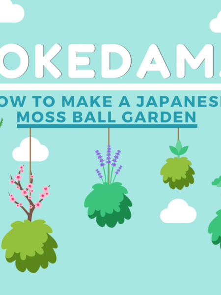 Kokedama: How to Make a Hanging Japanese Moss Ball Garden Infographic