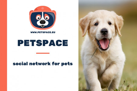 PetSpace | social network for pets Infographic