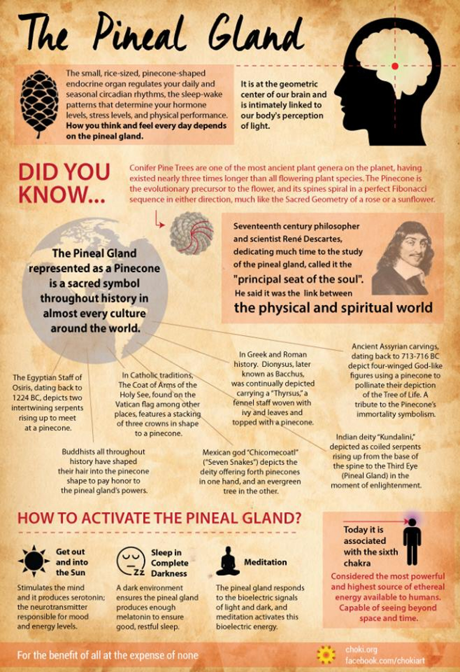 Pineal Gland : How To Activate Your Third-Eye?  Infographic