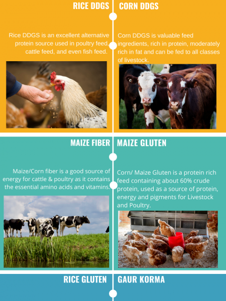 Prodigy Foods | Food For Pets Infographic