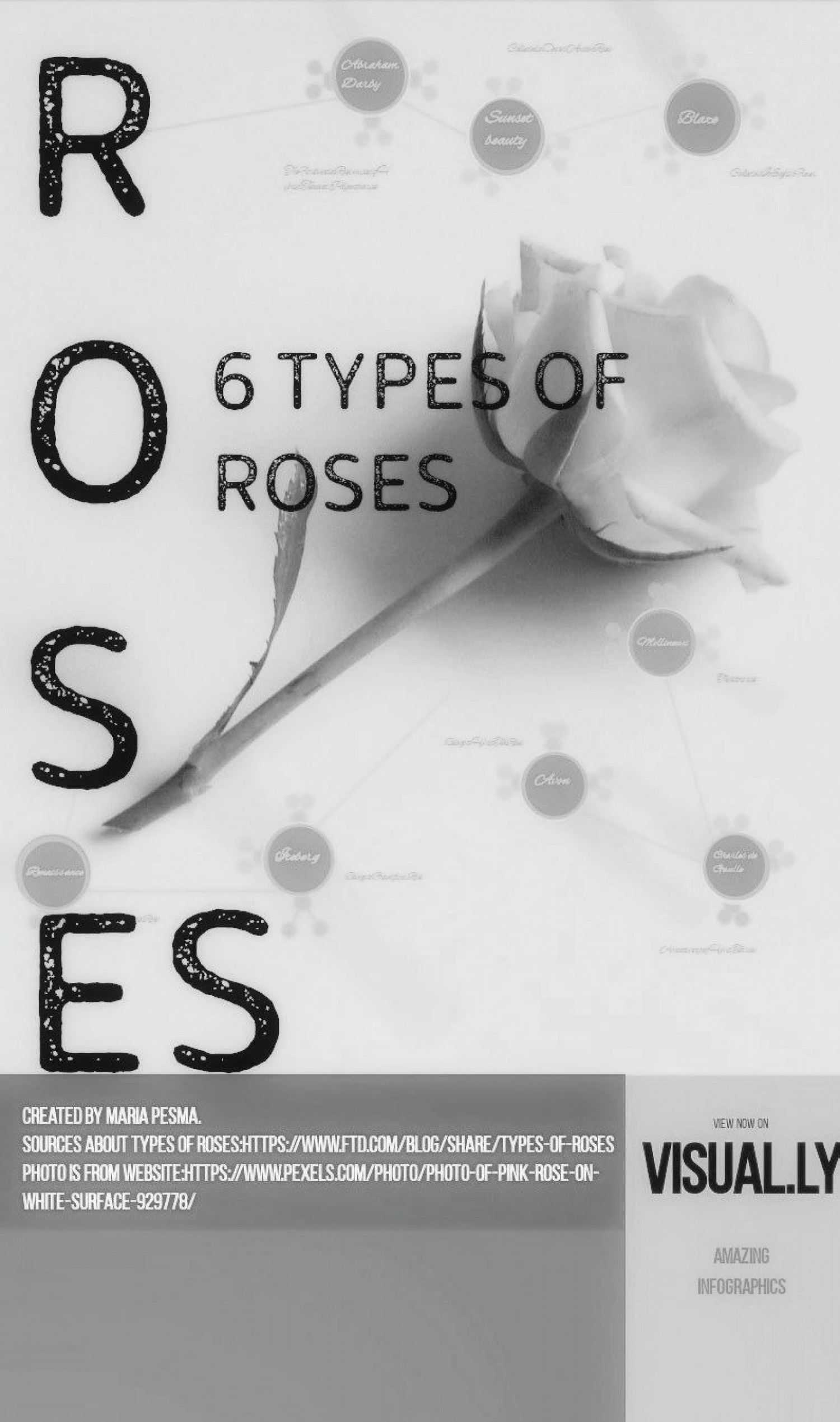 ROSES 6 TYPES OF ROSES Infographic