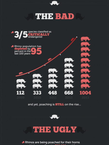 Save Rhinos Now Infographic