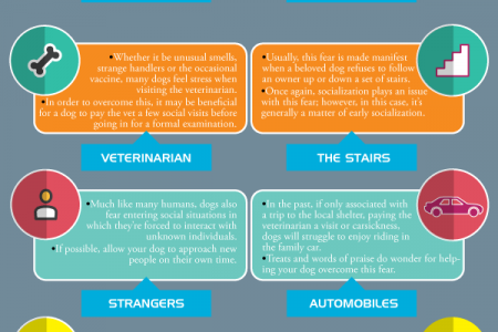 The 8 Most Prominent of Dog Fears and Phobias Infographic