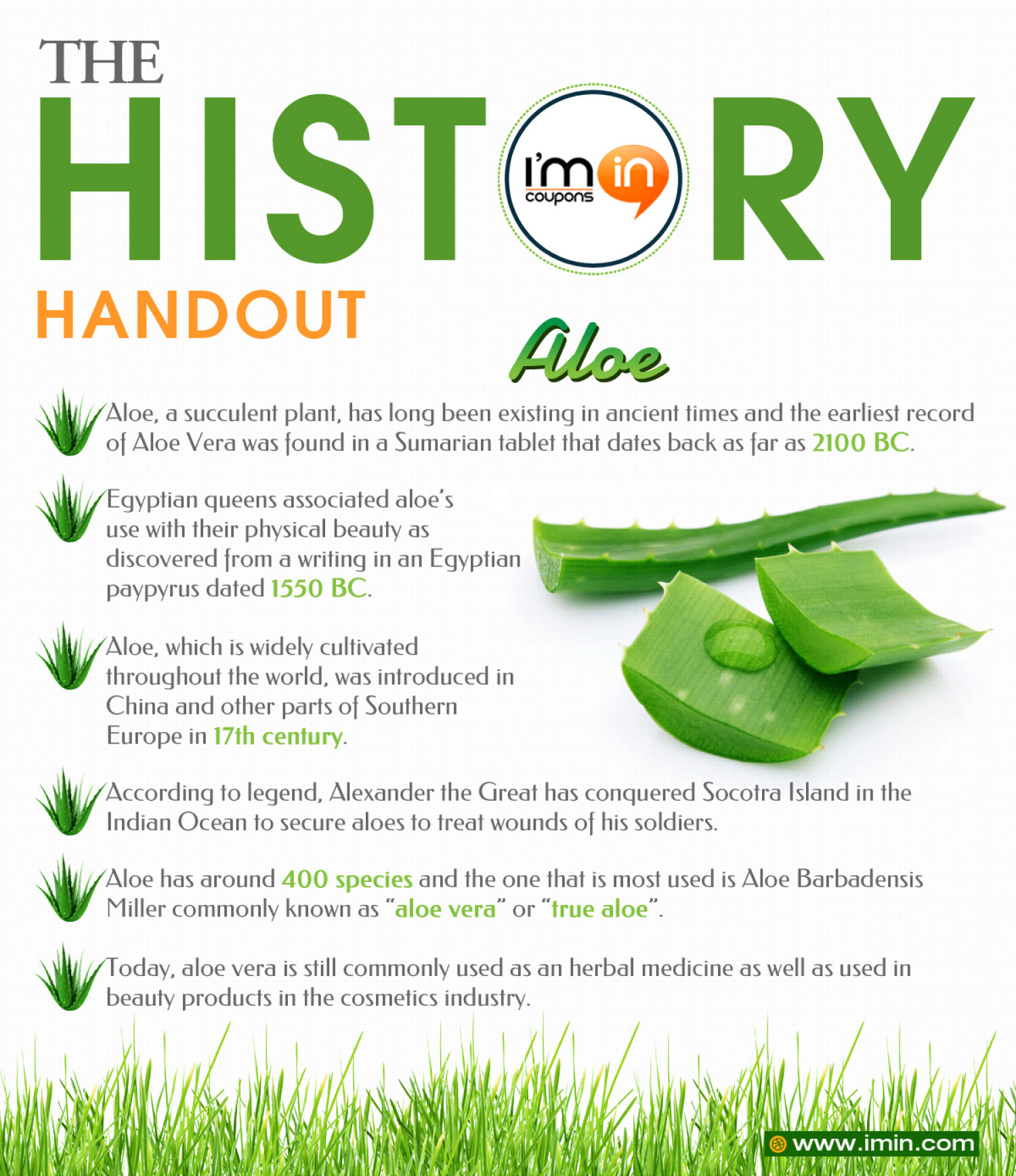 The History Handout - Aloe Infographic