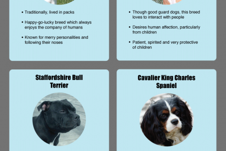 The Top 8 Friendliest Dogs for Families Infographic
