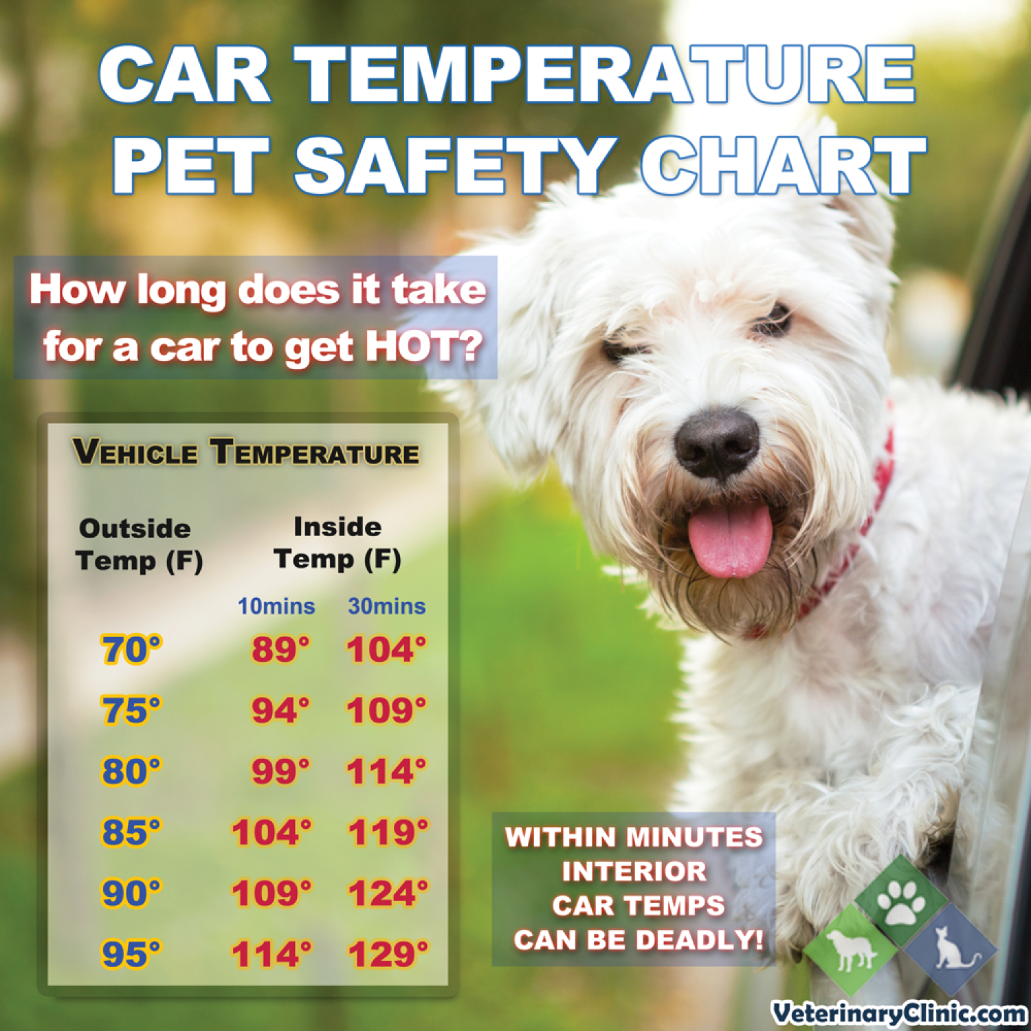 Vehicle Temperature Pet Safety Chart Infographic