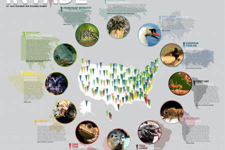 When Animals Invade Infographic