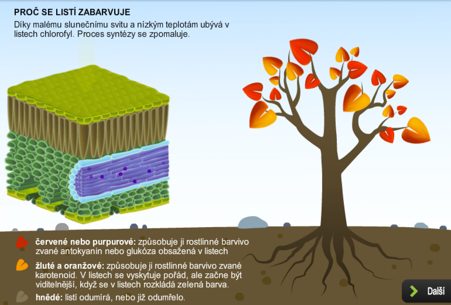 Why do leaves fall off trees? Infographic