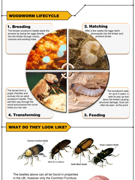 Woodworm - A quick guide Infographic