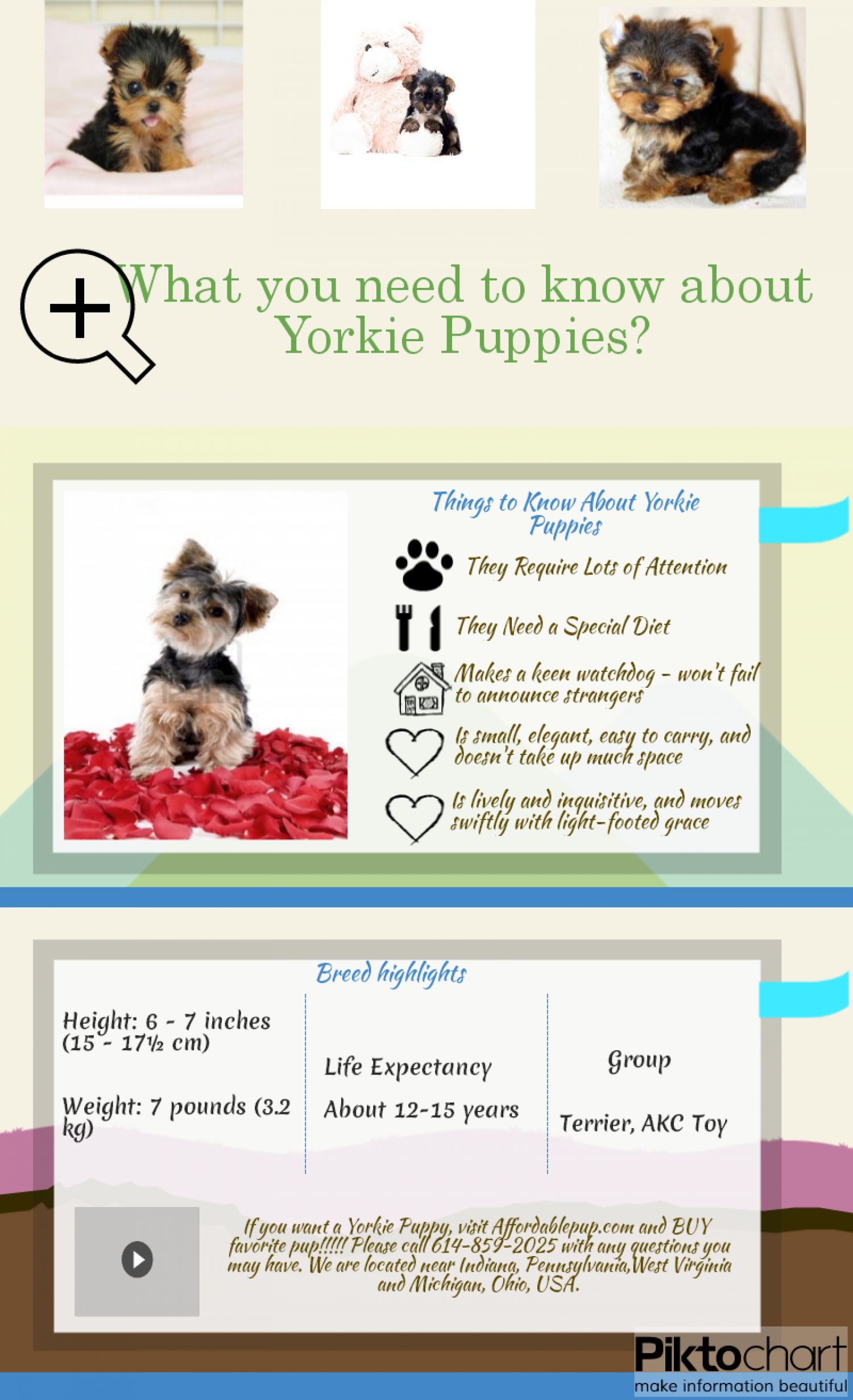 Yorkie Puppies - Things to know!!! Infographic